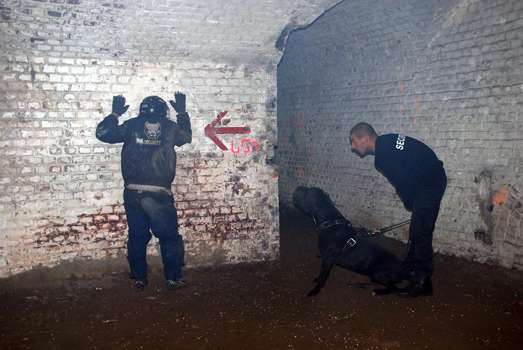Le Sport Canin Avec Le Cane Corso Possible